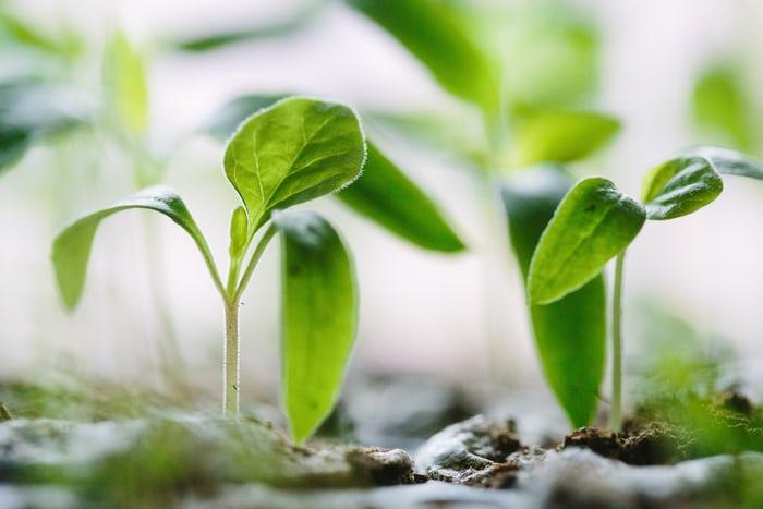 What Is Regenerative Land Management?
